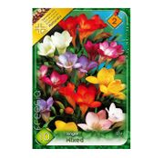 Bulbi de flori Frezii Single Mixed 10buc