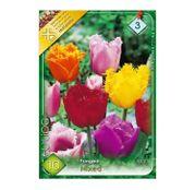 Bulbi de flori Lalele Fringed Crispa mixed 10 buc