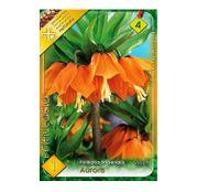 Bulbi de flori Fritillaria imperialis Aurora 1buc