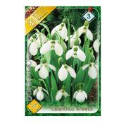 Bulbi de flori Ghiocel Galanthus elwesii 10buc