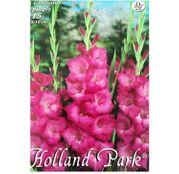Bulbi de flori Gladiole Purple 15buc