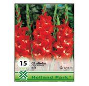 Bulbi de flori Gladiole red 15buc