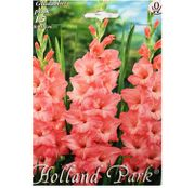Bulbi de flori Gladiole Pink  15buc
