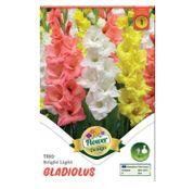Bulbi de flori Gladiole Trio bright light 9buc