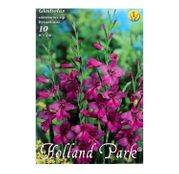 Bulbi de flori Gladiolus comm.ssp. Byzantinus 10buc.