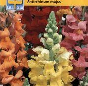 Seminte flori Gura Leului (Antirrhinum majus) Magic Carpet Mix 1g