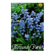 Bulbi de flori Hyacinthoides hispanica albastru 10buc