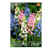 Bulbi de flori Hyacinthoides hispanica amestec culori 10buc