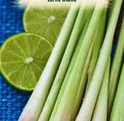 Seminte Iarba lemon - lemon grass- (Cymbopogon citratus)  0.05g