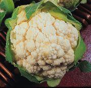 Seminte Conopida Igloo 1g