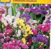 Seminte flori Saraturica perena (Limonium sinuatum) Formula Mix 0.5g