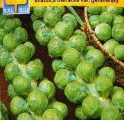 Seminte Varza de Bruxelles Groninger 2g