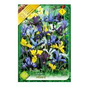 Bulbi de flori Iris Dwarf (Pitice) Mix 10buc