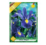 Bulbi de flori Iris hollandica Blue Magic 10 buc