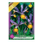 Bulbi de flori Iris hollandica Frans Hals 10buc