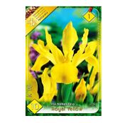 Bulbi de flori Iris hollandica Royal Yellow 10buc