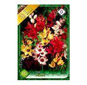 Bulbi de flori Ixia Mixed 15buc