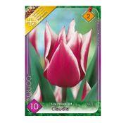 Bulbi de flori Lalele Claudia (5buc., 10buc.)