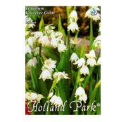 Bulbi de flori Ghiocel Leucojum aestivum Gravetye Giant  5buc