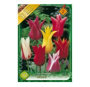 Bulbi de flori Lalea  Lilyflowered Mixed (10buc,25buc)