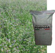 Seminte Lucerna Pomposa (25kg/sac)
