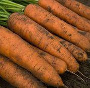 Seminte morcovi Belgrado F1 25.000 seminte