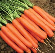 Seminte morcovi Romance F1 100.000 sem.