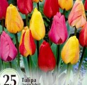 Bulbi de flori Lalele Darwin hybrid mix (10buc, 25buc)