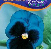 Seminte flori Panselute (Viola x witrockiana) albastre cu ochi negri 0,25g