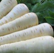 Seminte pastarnac Palace F1 25.000 seminte