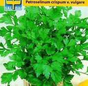 Seminte Patrunjel de Frunze Common 2g