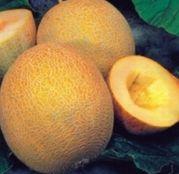 Seminte pepene galben Ananas F1 (50g, 250g)