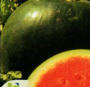 Seminte pepene verde Sugar Baby (25g,100g)