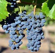 Butasi Vita de Vie Pinot Noir
