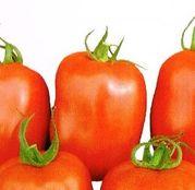 Seminte tomate (rosii) Dyno F1 1000 seminte
