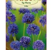 Seminte flori Gilia (Gilia capitata) violet  0.5g