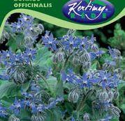 Seminte Limba mielului ( Borago officinalis ) 1g