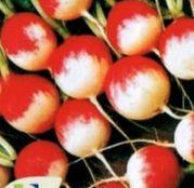 Seminte Ridichi de luna Gaudry 50 g