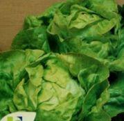 Seminte salata Hilde 10 g