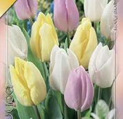 Bulbi de flori Lalea Prince Mixed 9buc