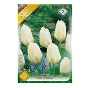 Bulbi de flori Lalele Purissima 10 buc