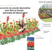 Seminte flori pentru amenajare rondou: Canna, Rudbeckia si Salvie