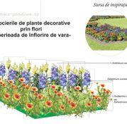Seminte flori pentru amenajare rondou: Gura leului, Nemtisori si Fluturei
