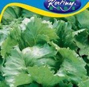 Seminte salata de tip Eisberg Tarzan 3g