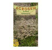 Seminte flori Saraturica perena (Limonium tataricum) alba 0,5g