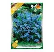 Bulbi de flori Scilla Siberica 10buc