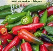 Seminte Ardei Iute mexic - Jalapeno 0.4g
