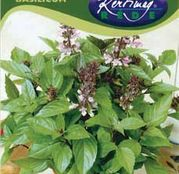 Seminte Busuioc cu aroma de scortisoara 1g