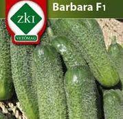 Seminte Castraveti Barbara F1 2g