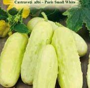 Seminte Castraveti albi - Paris Small White 1.5g